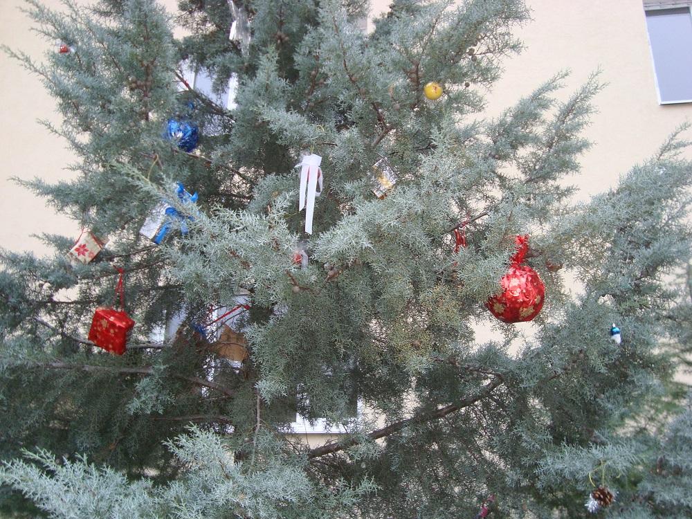 """Г-жа Кехайова и ученици от 7 и 8 клас от ОУ """"Петър Бонев"""" , гр. Перущица. """"Сребристата елха"""""""